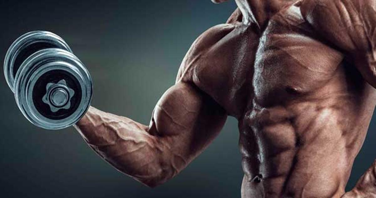 biceps y triceps